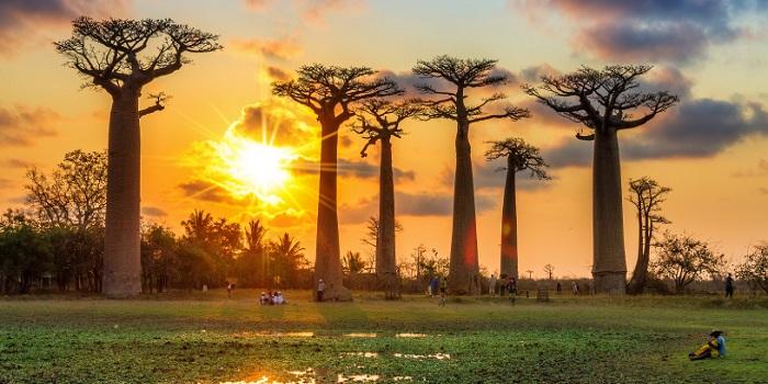 Dịch vụ đăng ký nhãn hiệu độc quyền tại Madagascar
