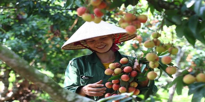 Quy định công bố thực phẩm nhập khẩu